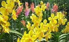 Chế vòi phun sương cho hoa lan